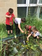 Reception pond dipping June 2021