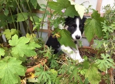 Buddy gardening